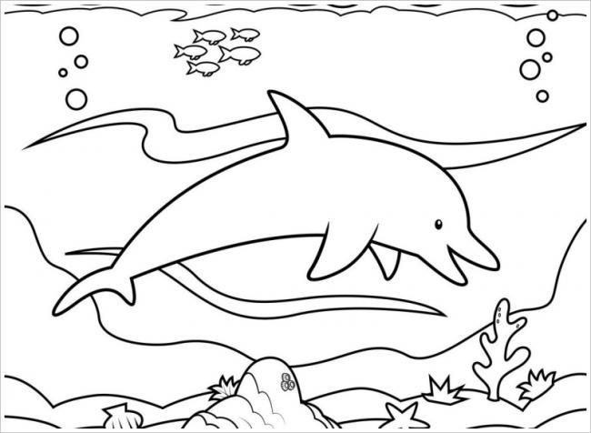 hình ảnh cá heo