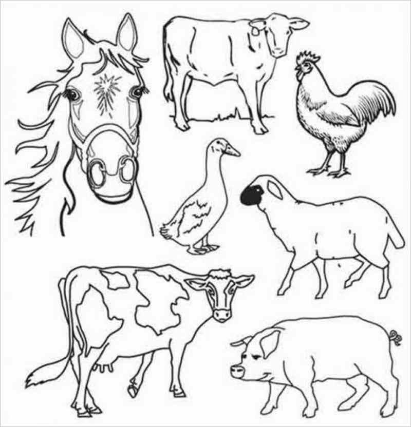 hình ảnh con vật nuôi