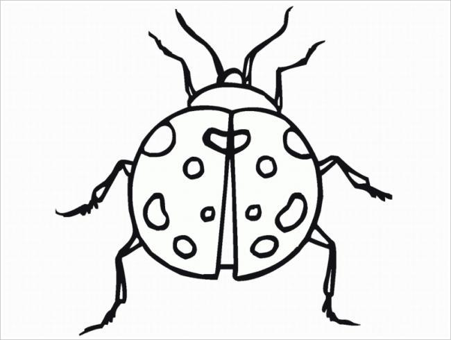 hình ảnh bọ rùa