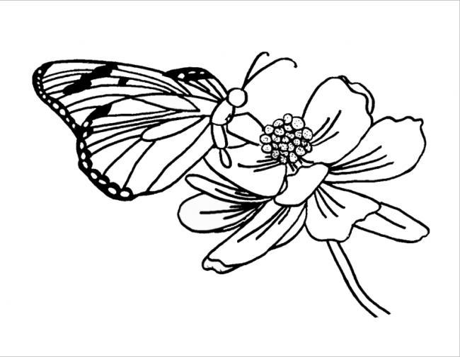 hình tô màu bướm đậu bên hoa