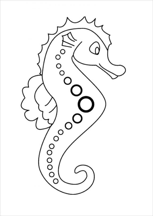cá ngựa xinh đẹp