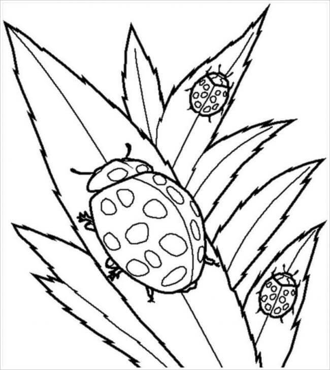 hình ảnh con bọ