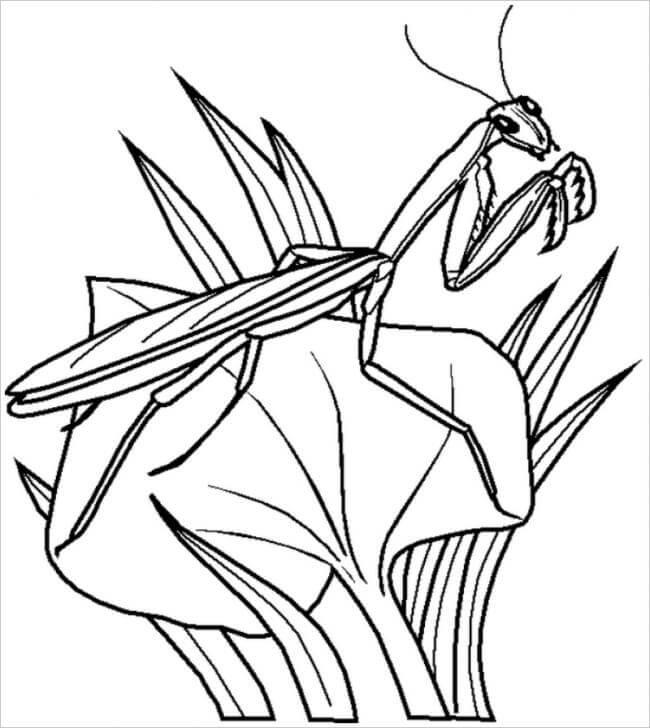 hình ảnh bọ ngựa