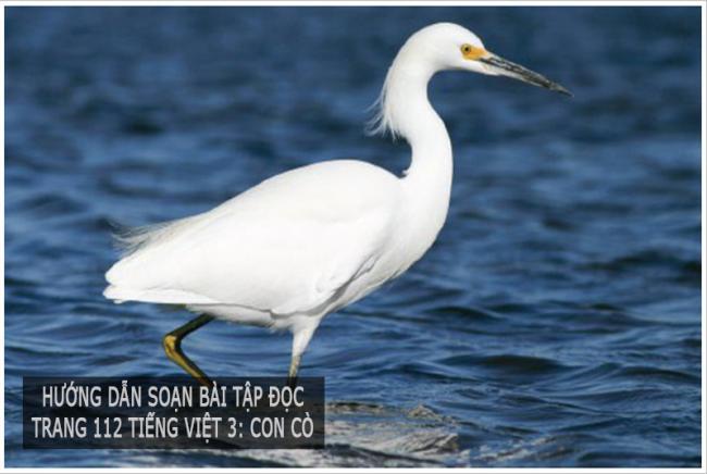 Hướng dẫn soạn bài tập đọc Trang 112 Tiếng Việt 3: Con cò