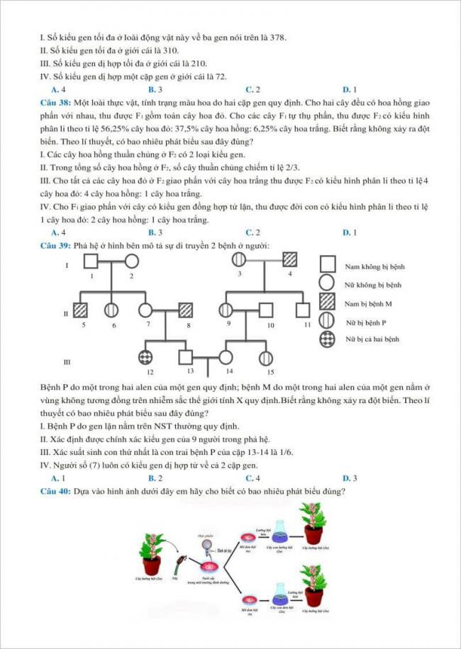 câu 38 đến 40 trang 5 đề thi sinh chuyên thái binh