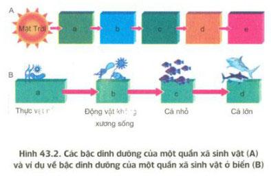 Trả lời câu hỏi sinh bài 43 trang 193 sgk sinh học 12