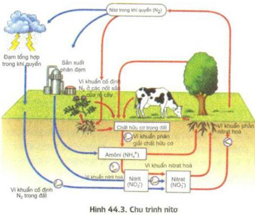 Qua sơ đồ hình 44.3, sự trao đổi nitơ trong tự nhiên.