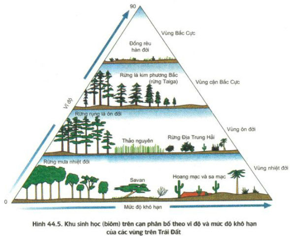 Hình 44.5,sự phân bố vùng theo vĩ độ và mức độ khô hạn của các khu sinh học trên cạn.