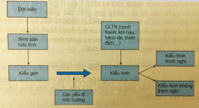 Sơ đồ (hình 47.1)  bài 2 trang 212 sgk sinh học lớp 12