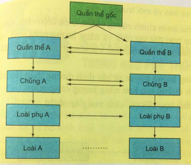 Sơ đồ (hình 47.2). bài 4 trang 212 sgk sinh học lớp 12 - Ôn tập phần tiến hóa và sinh thái học