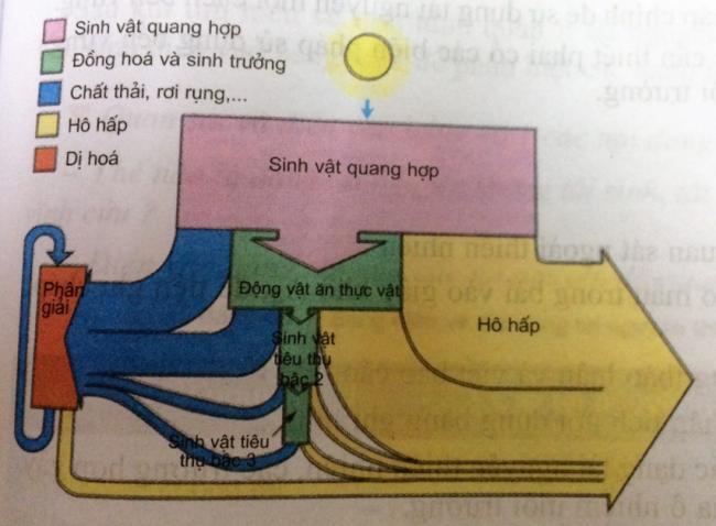 Hình 45.4. Sơ đồ minh họa dòng năng lượng trong một hệ sinh thái đồng cỏ