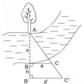 hình 18