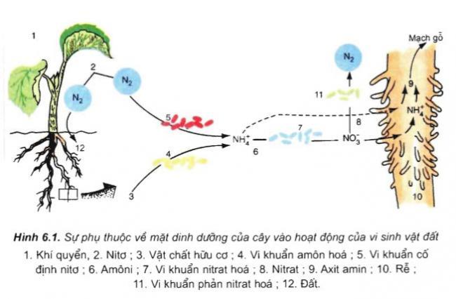 câu hỏi thảo luận bài 6 trang 28 sgk sinh học 11