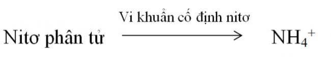đáp án câu hỏi bài 6 trang 29 sgk sinh học lớp 11