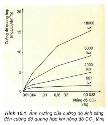 Hình 10.1 câu hỏi thảo luận trang 44 sgk sinh học 11
