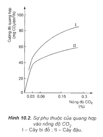 Hình 10.2 câu hỏi thảo luận 1 trang 45 sgk sinh học 11
