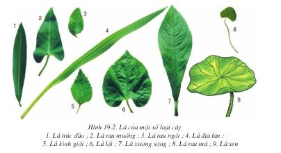 hình 19.2