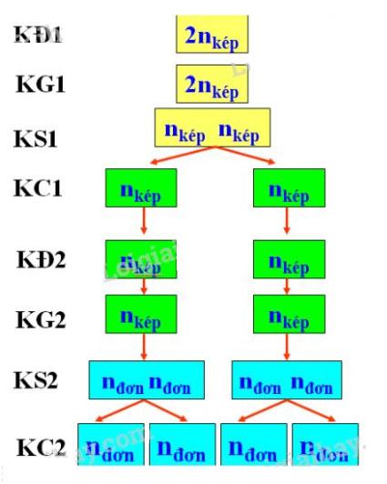 Đáp án bài 4 trang 33 sgk sinh học 9