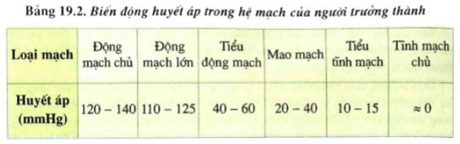 câu hỏi thảo luận 1 trang 84 sgk sinh 11