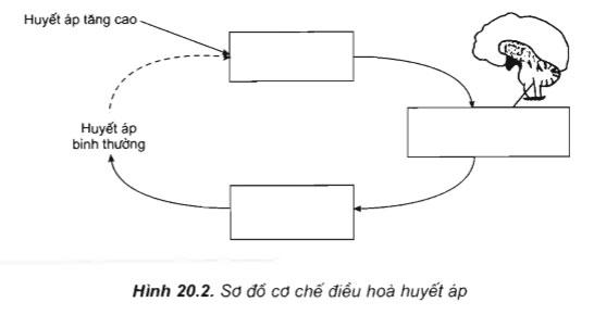 câu hỏi thảo luận trang 87 sgk sinh 11