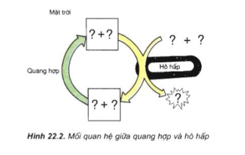 câu hỏi thảo luận trang 95 sgk sinh 11