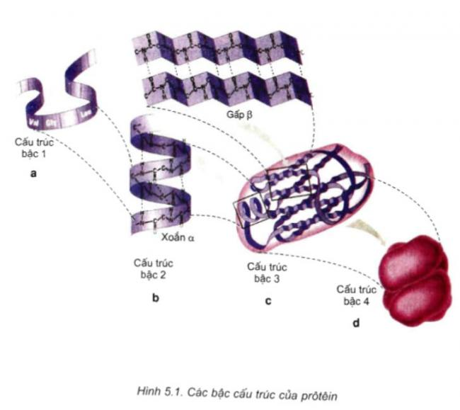 Bài 1 trang 25 sgk sinh học 10