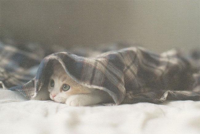 Hình ảnh chú mèo được miêu tả trong bài văn số 4