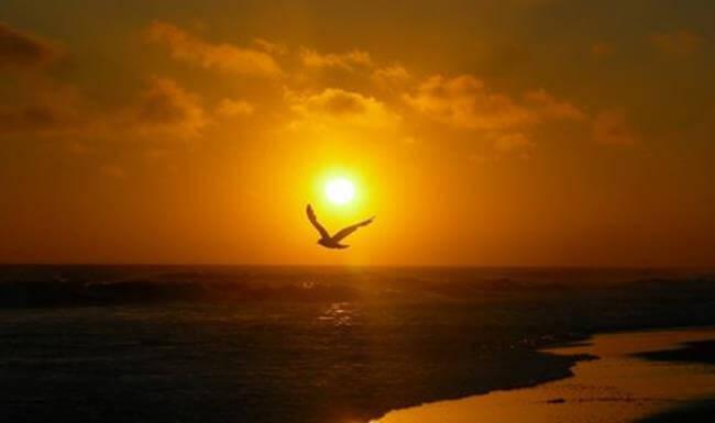 Cảm nhận vẻ đẹp tâm hồn Bác trong bài thơ Chiều tối