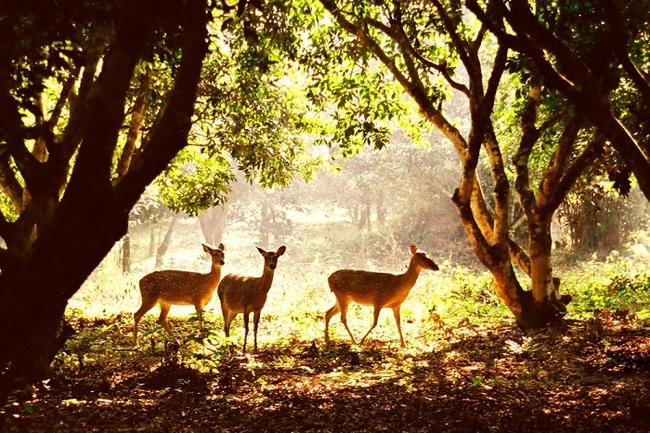 Giới thiệu một danh lam thắng cảnh ở quê em - vườn quốc gia Cúc Phương