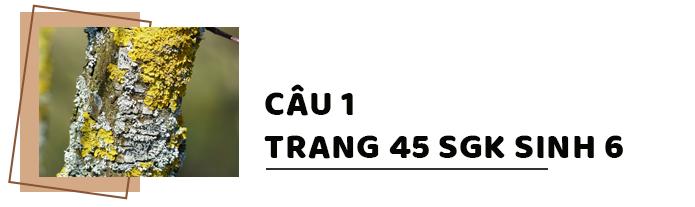 Câu 1 trang 41 SGK Sinh học 6
