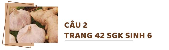 Câu 2 trang 42 SGK Sinh học 6