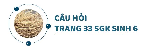 Câu hỏi thảo luận trang 33 SGK Sinh 6