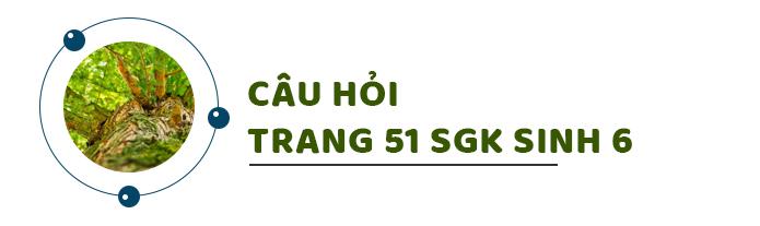 Câu hỏi thảo luận trang 51 SGK Sinh 6