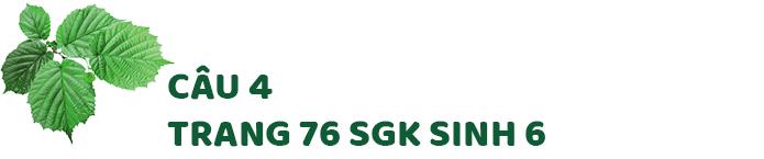 Câu 4 trang 76 SGK Sinh học 6
