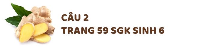 Trả lời câu 2 sgk trang 59 sinh học 6