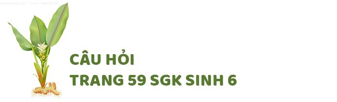 Câu hỏi thảo luận trang 60 SGK Sinh 6