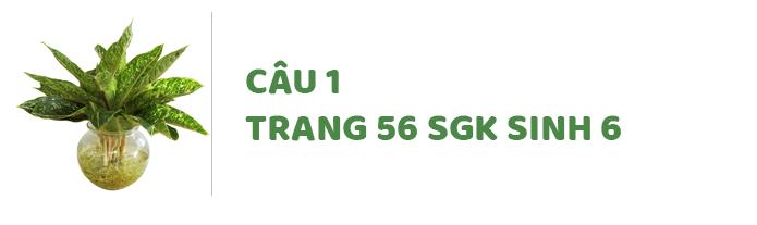 Câu 1 trang 56 SGK Sinh học 6