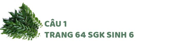Câu 1 trang 64 SGK Sinh học 6