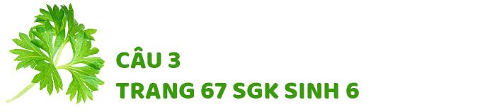 Câu 3 trang 67 SGK Sinh học 6
