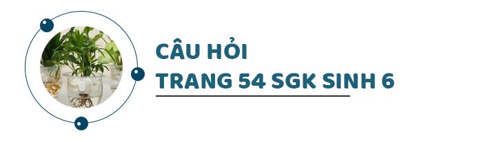 Câu hỏi thảo luận trang 54 SGK Sinh 6