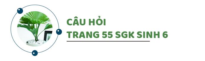 Câu hỏi thảo luận trang 55 SGK Sinh 6