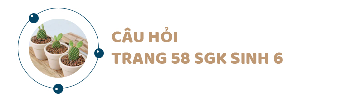 Câu hỏi thảo luận trang 58 SGK Sinh 6