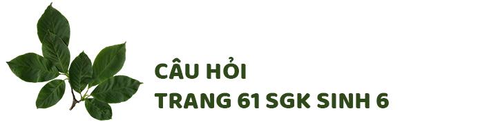 Câu hỏi thảo luận trang 61 SGK Sinh 6