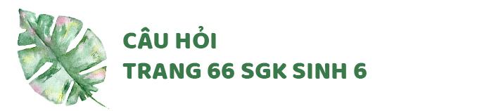 Câu hỏi thảo luận trang 66 SGK Sinh 6