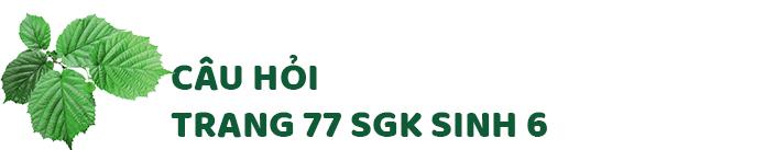 Câu hỏi thảo luận trang 77 SGK Sinh 6