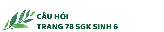 Câu hỏi thảo luận trang 78 SGK Sinh 6