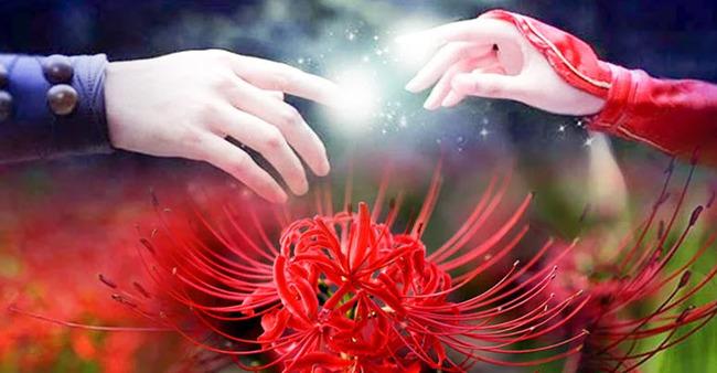 Thuyết minh về hoa Bỉ Ngạn là câu chuyện tình yêu đau buồn