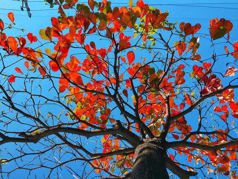 Tả cây bàng mùa đông