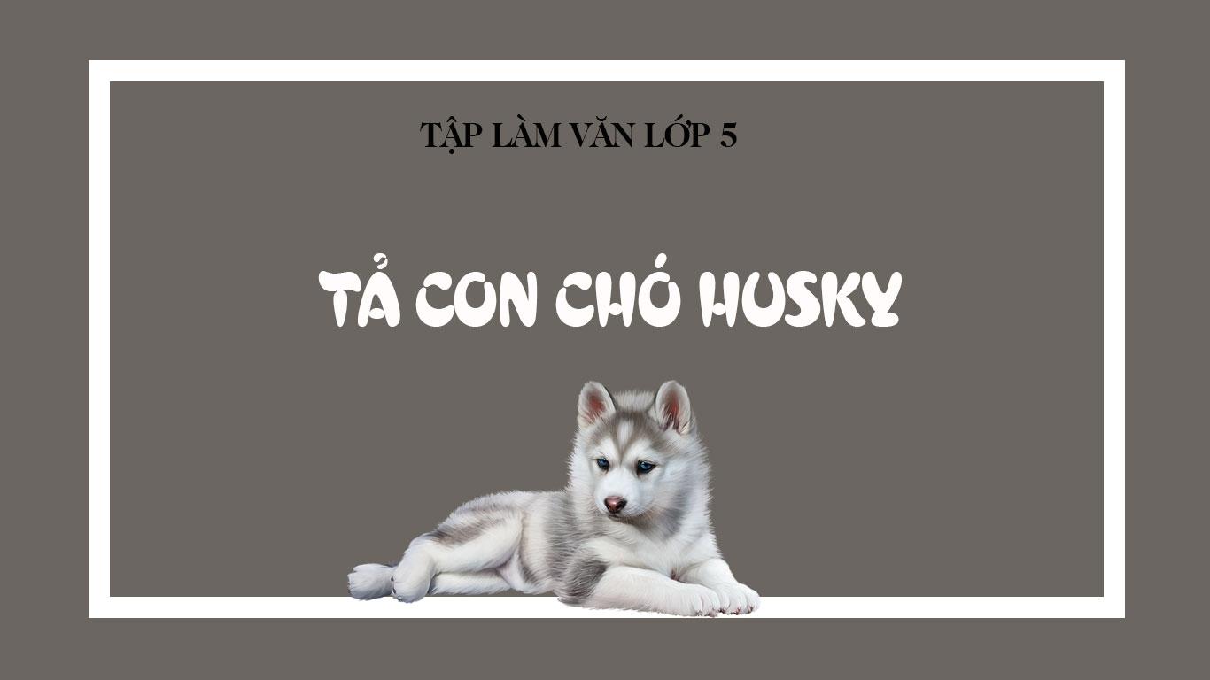 Ta chu cho husky lop 5